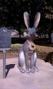 The world's largest jackrabbit.