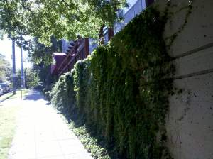 Soon the creeping ivy will take over.