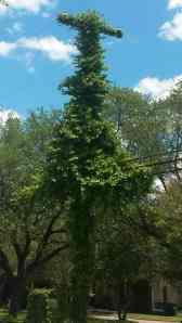 Climbing ivy has engulfed the telephone pole.