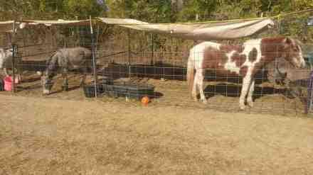 A farm animal sort of zoo.