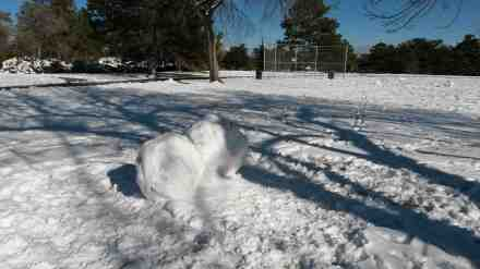 The makings of a snow man.