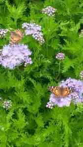 Wild flowers and butterflies.