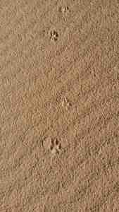 Follow the paw prints.