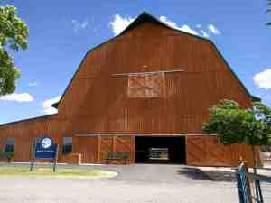 Visit the horse and cattle barn.